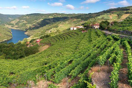Vignobles le long de la rivière Minho, Ribeira Sacra dans la province de Lugo, Espagne