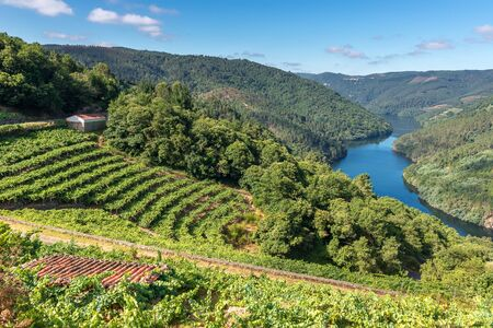 Vineyards along Minho River, Ribeira Sacra in Lugo province, Spain Stockfoto