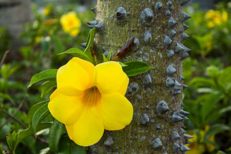 Close up of trunk of tree with thorns and a yellow flower with green foliage on a field.
