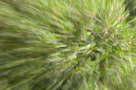 vertigo: Green vertigo induced by the camera motion