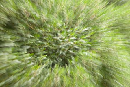 induced: Green vertigo induced by the camera motion
