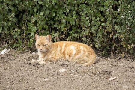 blond cat sitting on the ground