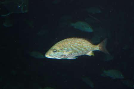 gills: Fish Stock Photo