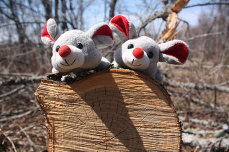 Forest Mice photo