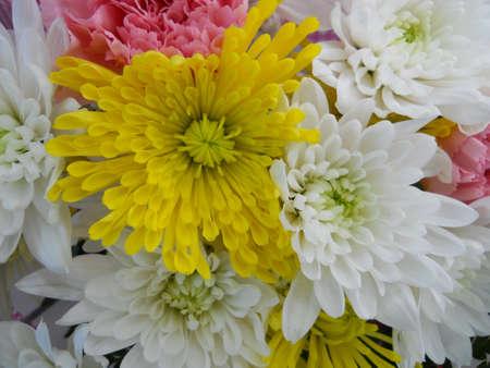 Flowers Stock Photo - 13614009