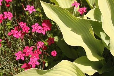 Flowers Stock Photo - 14094916