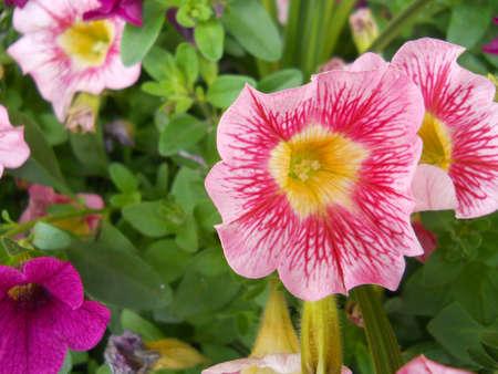 Flowers Stock Photo - 14341625