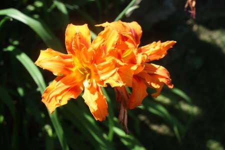 Summer Garden Stock Photo - 14945007