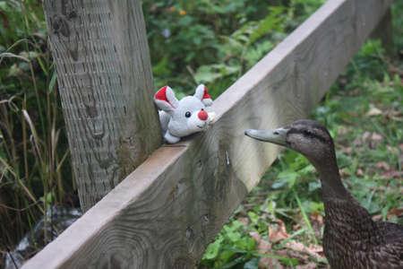 Mallard Duck and mouse Stock Photo - 15073408
