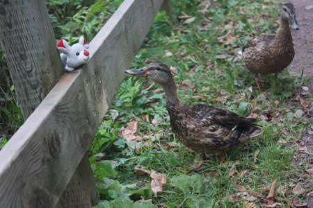 Mouse and Ducks photo