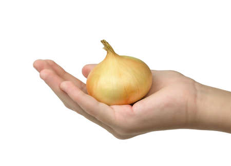 A hand holding organic onion isolated on white background Reklamní fotografie