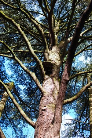 natural force: Tree