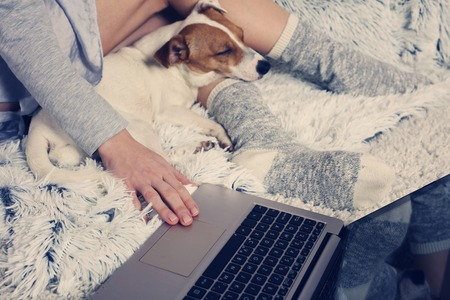Woman in cozy home wear relaxing at home with sleeping dog Jack Russel terrier, using laptop. Soft, comfy lifestyle. Reklamní fotografie