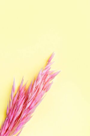 Vertical top view of pink spikelets on a yellow background. Design. Spring and summer texture. Mothers Day, Womens Day, March 8th background. Copy space for text