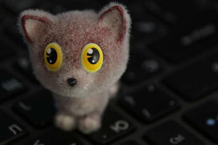 kitten on the keyboard 免版税图像