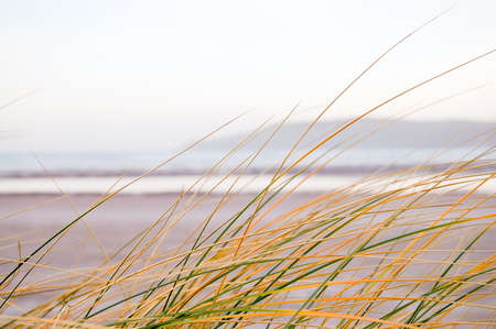 irish countryside: View of grass on beach in County Donegal in Ireland.