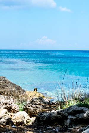 shorelines: View of the shore of the Mediterranean Sea.