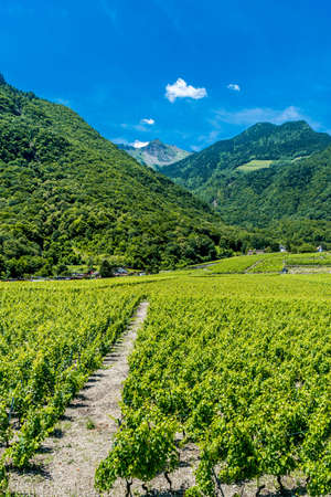 swiss culture: Vineyards near Montreux and Evian, in France.