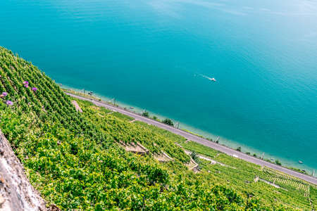 the world heritage: The UNESCO world heritage site of the Lavaux Vineyards near Lausanne in Switzerland.