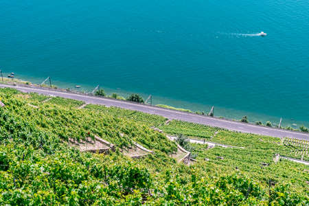 unesco world cultural heritage: The UNESCO world heritage site of the Lavaux Vineyards near Lausanne in Switzerland.