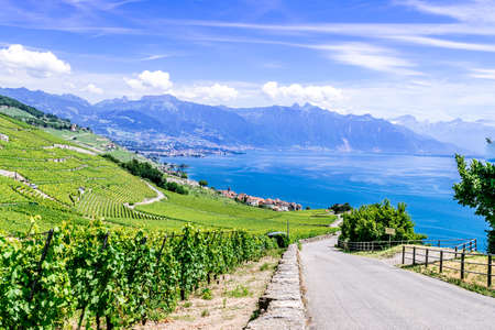 world heritage site: The UNESCO world heritage site of the Lavaux Vineyards near Lausanne in Switzerland.