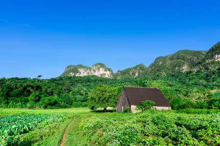 unesco world heritage site: 13 September 2015: Farmers barn on field in the UNESCO world heritage site of Vinales, Cuba.