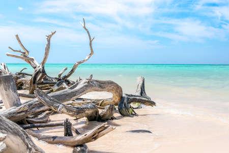pinar: Branches on the beach of Cayo Jutias in the Pinar del Rio region in Cuba.