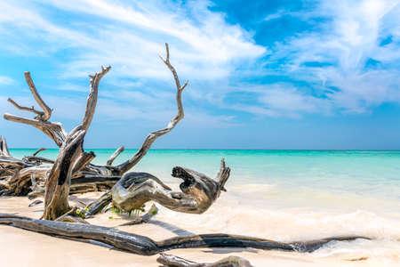 keys to heaven: Branches on the beach of Cayo Jutias in the Pinar del Rio region in Cuba.