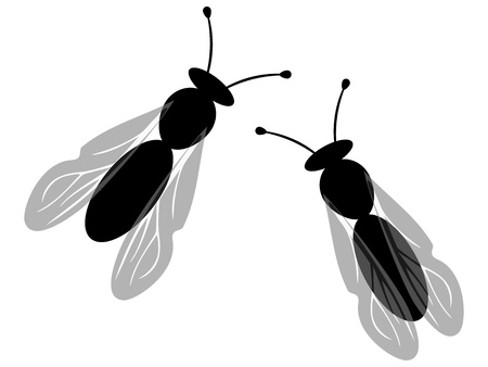 manure: Two insects
