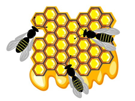 Bees and honey, bees on sweet honeycomb Stock Vector - 21654414