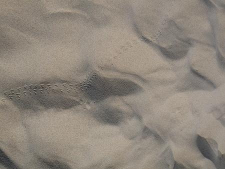animal tracks: Impronte di animali nella sabbia tracce degli animali Archivio Fotografico