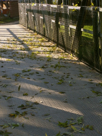 footway: Bridge across river with autumn leaves on footway