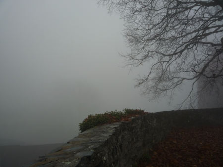 sear and yellow leaf: Foggy landscape in the sear and yellow leaf