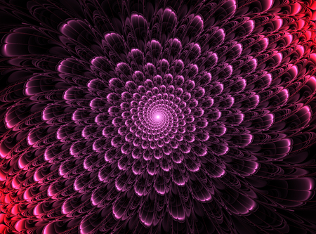 pinkish: Magic pinkish flower petals on black background