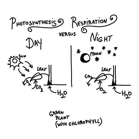 h2o: Photosynthesis versus respiration as quick handwritten sketch