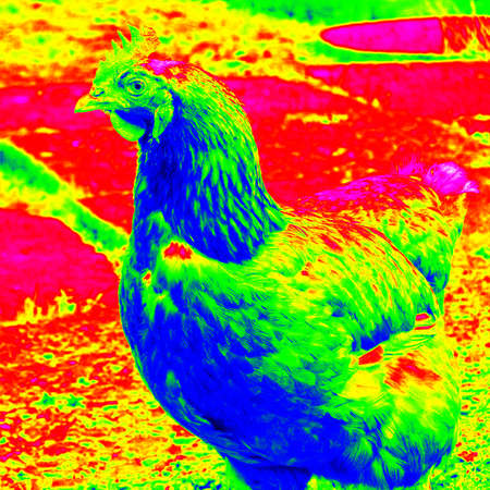 View on picture of hen in infrared spectrum