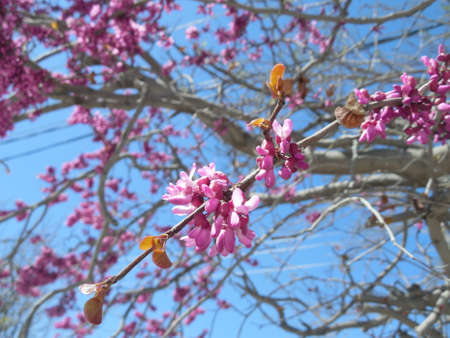 pinkish: Spring pinkish flowers on unknown fresh tree