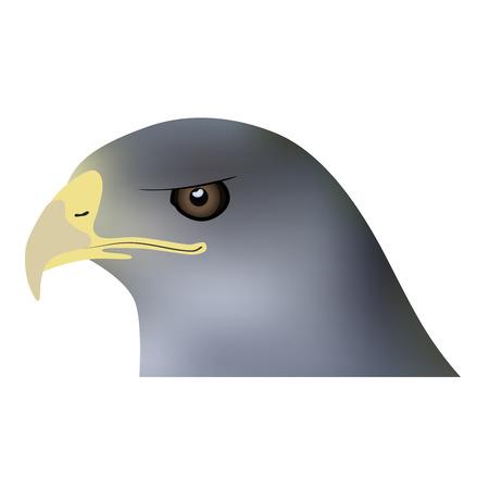 buzzard: Illustration of head of bird of prey Illustration
