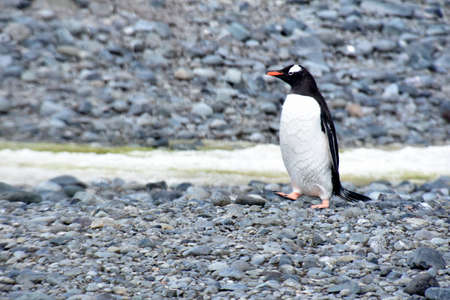 Stock pictures of penguins in the Antarctica peninsula Imagens