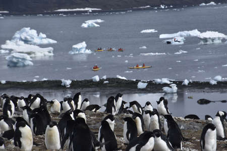 Stock pictures of penguins in the Antarctica peninsula with people kayaking