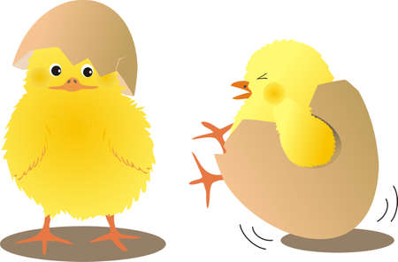 chicks with eggs Vector
