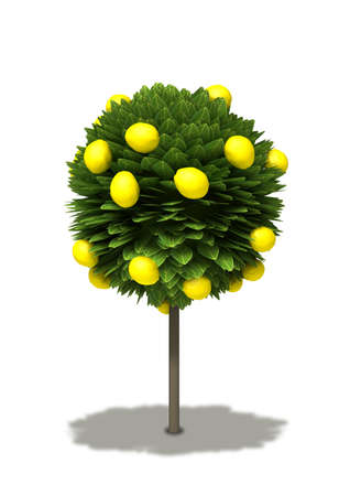 A stylized cartoon type standard lemon tree with round shaped foliage and yellow lemons on an isolated background