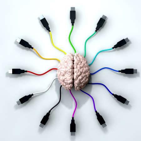 Un cerebro humano con el cable usb multicolor se extiende y alcanza hacia fuera de su centro