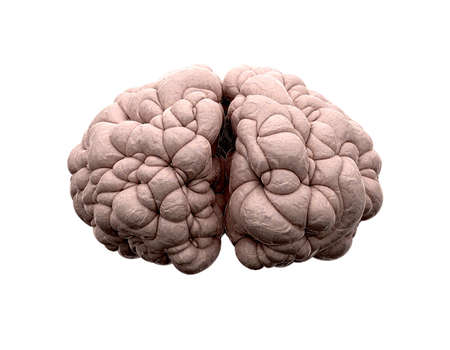 reasoning: A front view of a typical brain on an isolated background Stock Photo