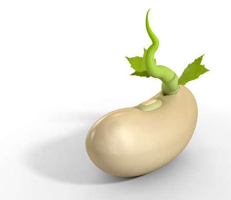 planta de frijol: Un primer plano de un grano de azúcar regular germinando un zarcillo verde con dos hojas verdes en un fondo aislado