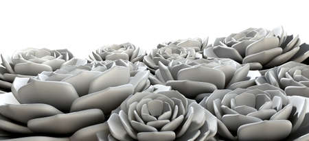 unsaturated: A grey unsaturated selection of rock rose succulents  on an isolated background Stock Photo