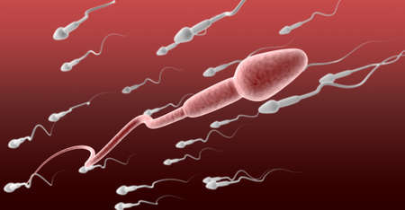 sperm cell: A microscopic perspective view of a pink sperm cell in the foreground swimming in the opposite direction to a group of white sperm on a red and maroon background