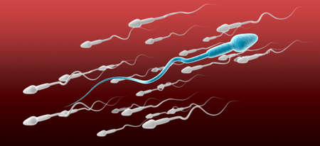 sperm cell: A microscopic side view of a blue sperm cell in the foreground swimming in the opposite direction to a group of white sperm on a red and maroon background Stock Photo