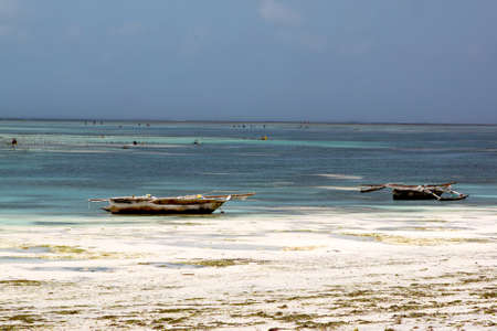 Traditional dhow sail boats run aground at low tide alongside a sandy white beach in Zanzibar