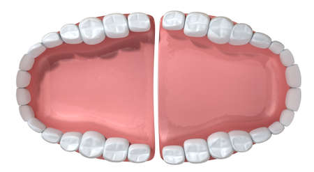 An extreme closeup of a set of open false human teeth set in pink gums on an isolated background Stock Photo - 22143505